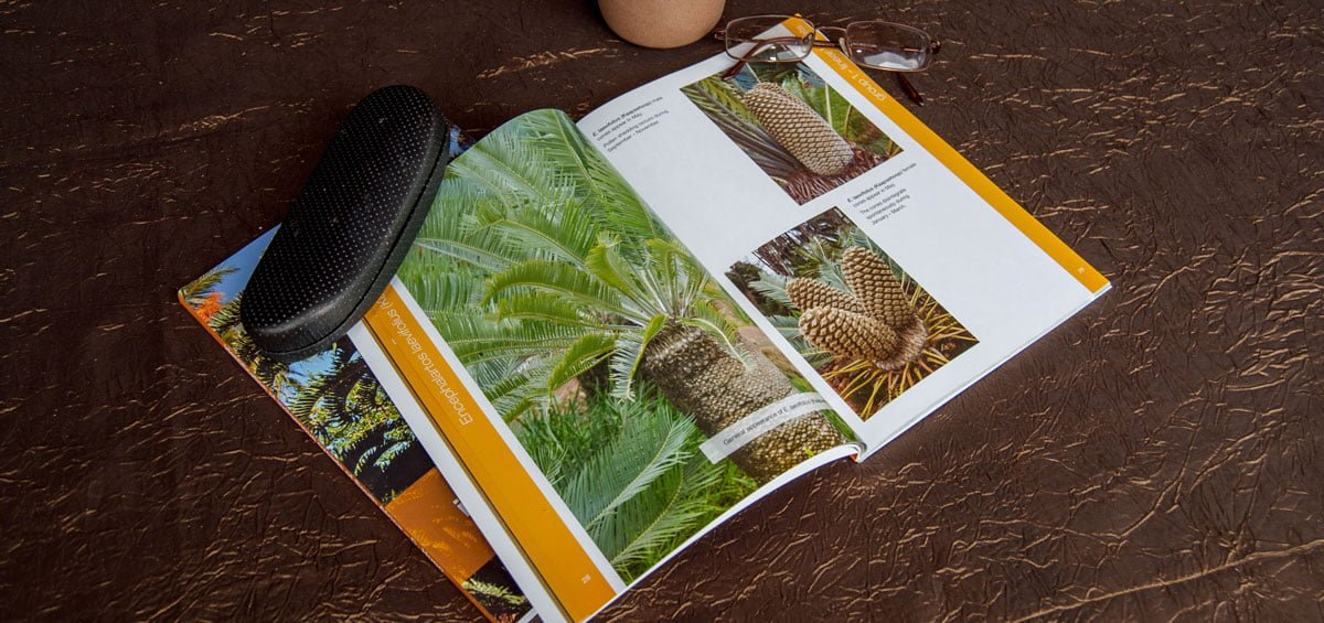 Using Cones to Identify Indigenous Cycads of South Africa Book